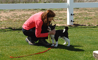 K Dog Training Chesterfield